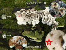 kinkinsama_1359074705000_1.jpg