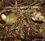 kinkinsama_1359074840000_2.jpg