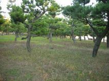 koutoku_1292765020000_DSCN8243.jpg