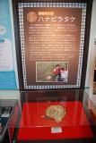 maikawa_1298123901000_DSC_0089.jpg