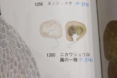 syougenji_1349441442000_1.jpg